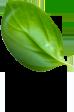 background image: leaf